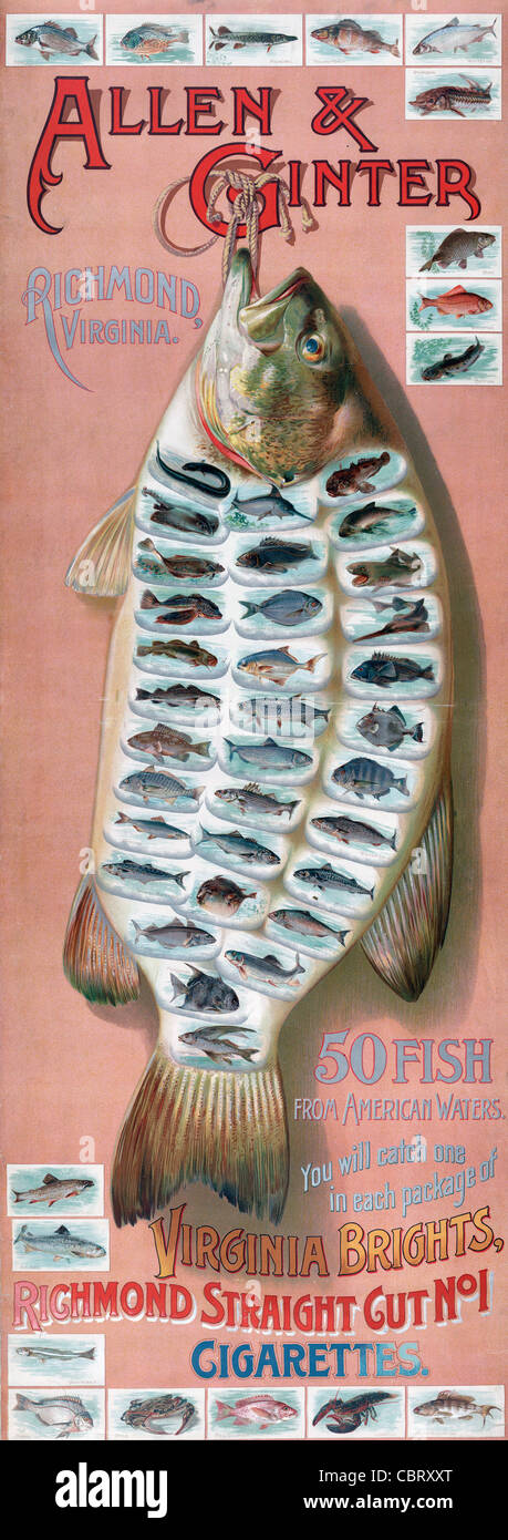 Allen & Ginter, Richmond, Virginia. 50 fish from American waters. You will catch one in each package of Virginia - Stock Image