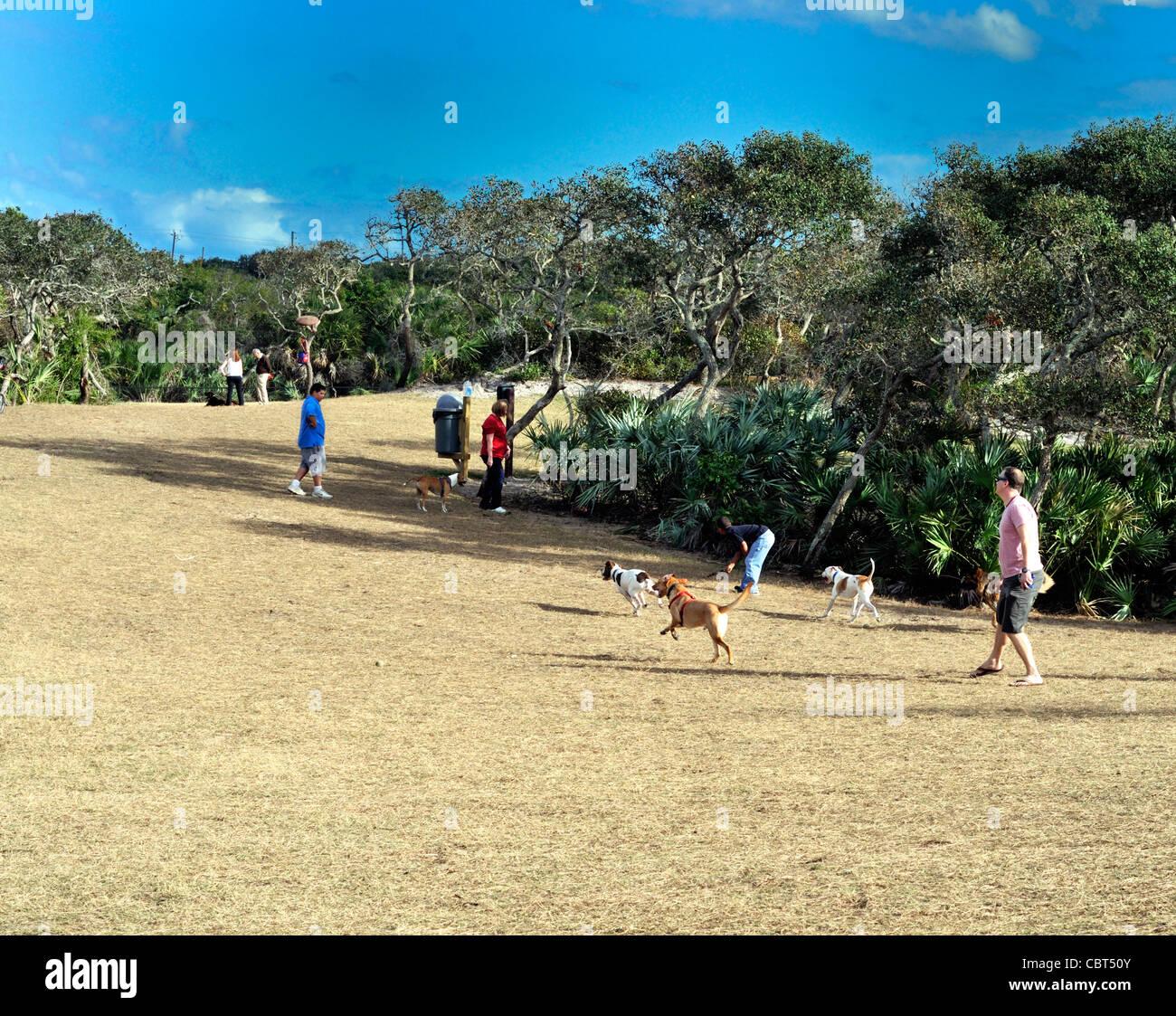 Dogs enjoying the Bicentennial park dog park in Ormond Beach, Florida - Stock Image