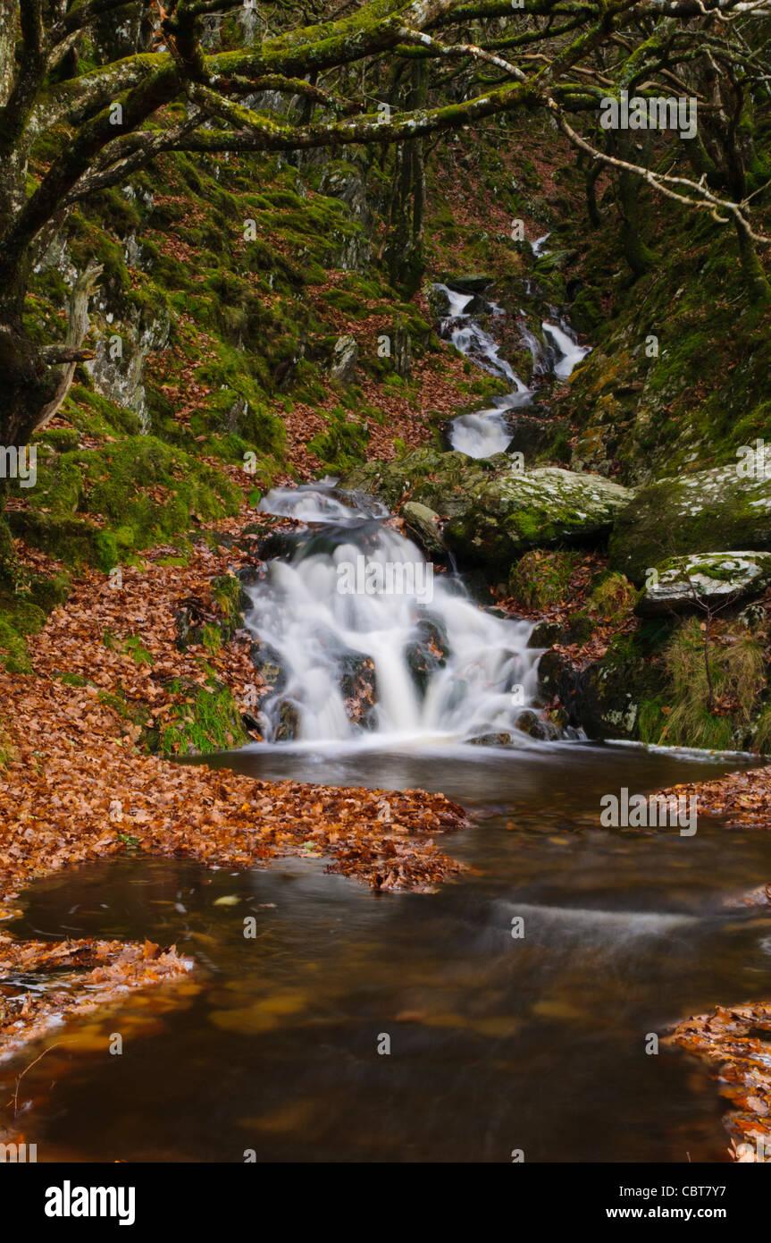 Welsh Mountain Stream - Stock Image