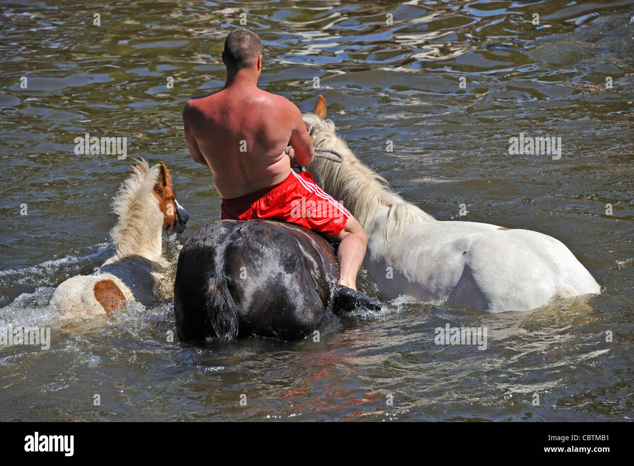 Gypsy traveller with three horses in River Eden. Appleby Horse Fair, Appleby-in-Westmorland, Cumbria, England, United - Stock Image