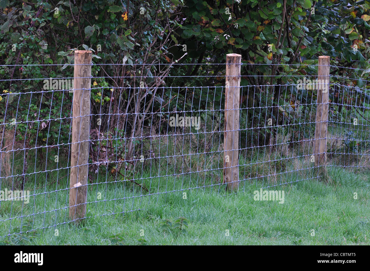A wire sheep fence UK Stock Photo: 41725157 - Alamy
