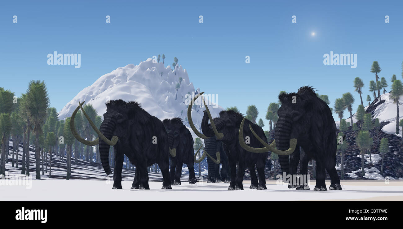 A herd of Woolly Mammoths migrate to a warmer climate in the Pleistocene Age. - Stock Image