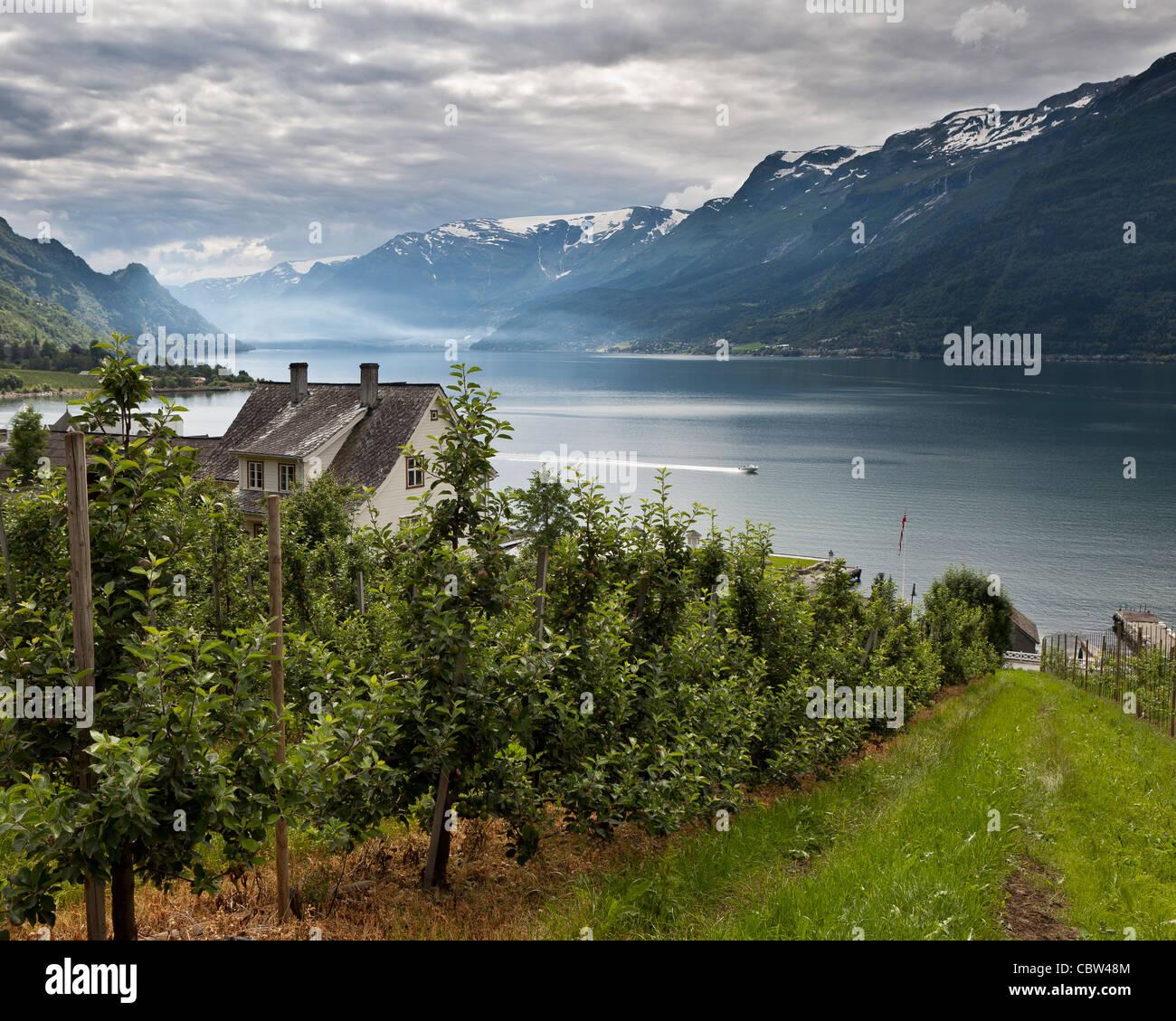 Apple Orchard, Lofthus, Ullensvang, Norway - Stock Image