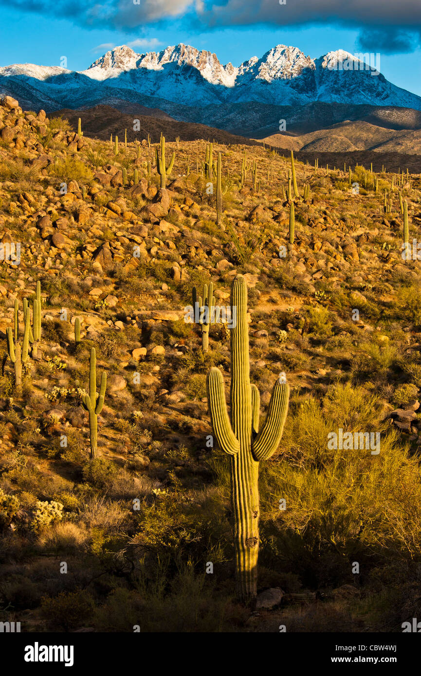 Four Peaks (Yavapai: Wikopa, at 7657 feet (2335 m) in altitude, is a prominent landmark on the eastern skyline of Stock Photo