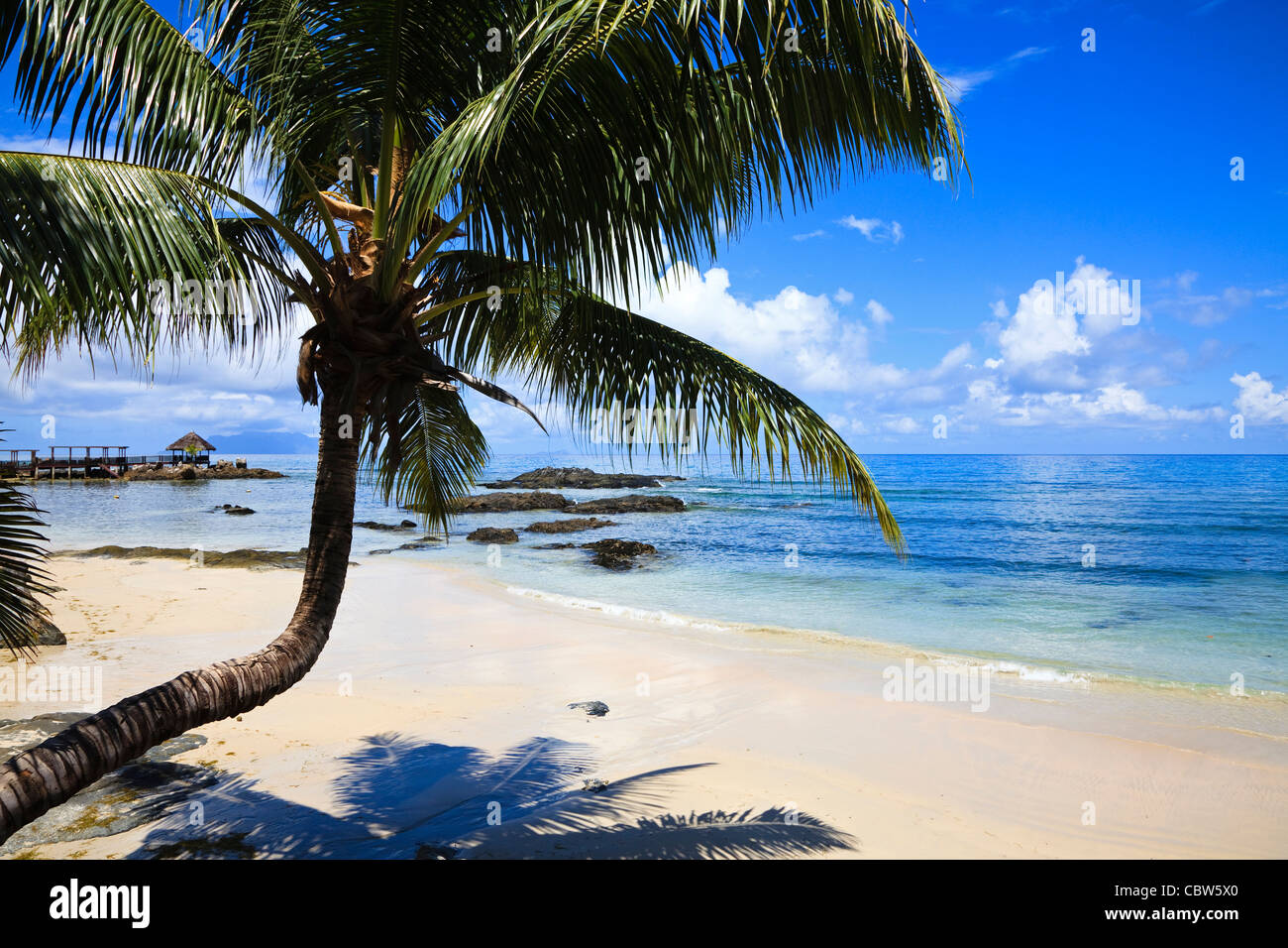 Beach with palm tree at Fisherman's Cove, Bel Ombre, Mahe Island, Seychelles - Stock Image