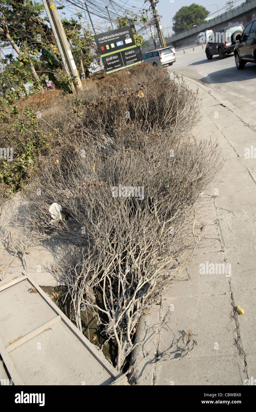 Dead plants on street after floodwaters in Thailand reduced - Stock Image