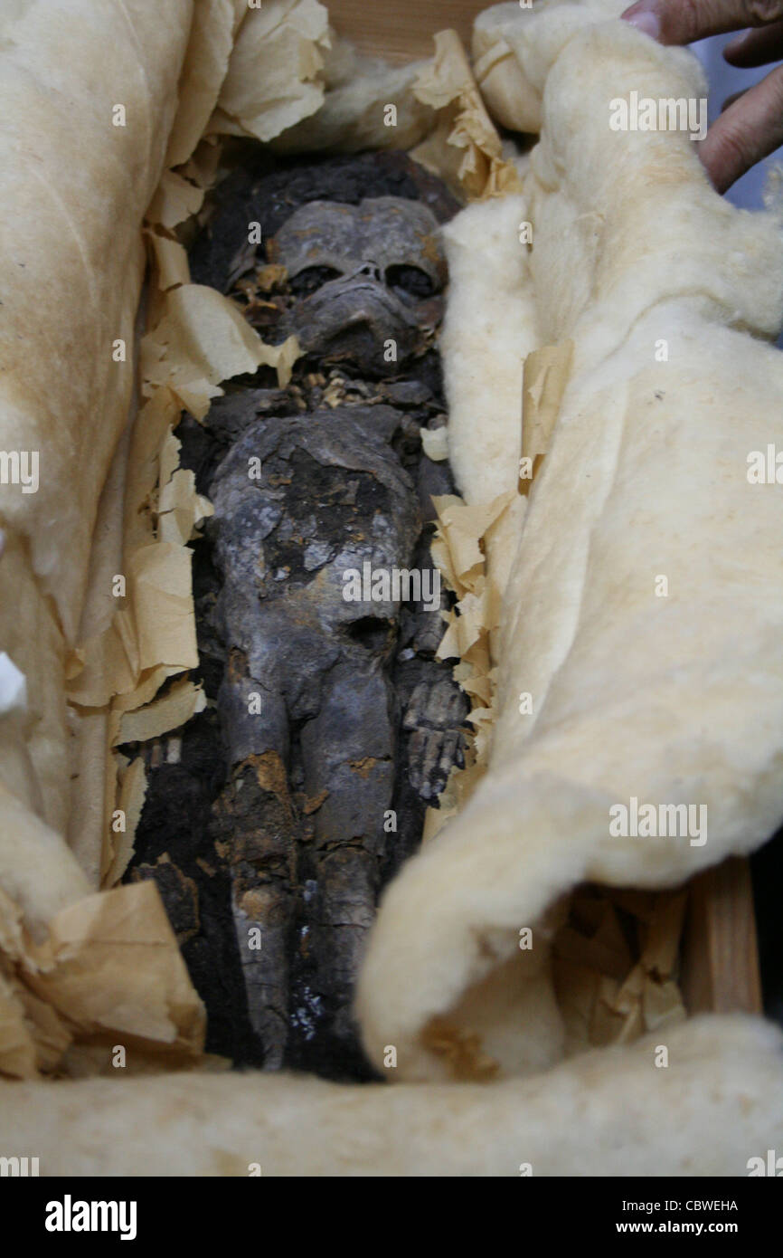 Scientists study two mummified fetuses stored at Cairo university since their discovery in 1922 alongside King Tut - Stock Image
