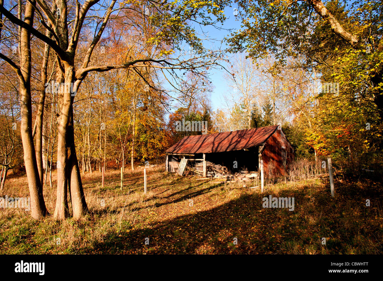 Barn at Fawley, Henley-on-Thames, in Chilterns beech wood. - Stock Image