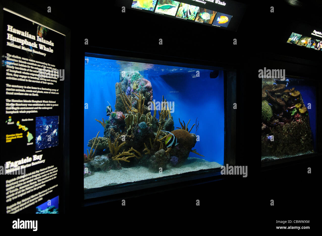 WASHINGTON DC, USA - A tropical reef exhibit at the National Aquarium in Washington DC. The National Aquarium is - Stock Image