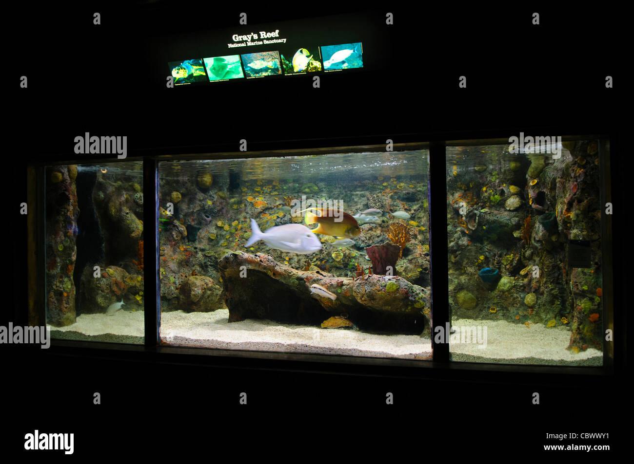 An exhibit of Gray's Reef National Marine Sanctuary. The exhibit is part of Washington DC's National Aquarium. - Stock Image