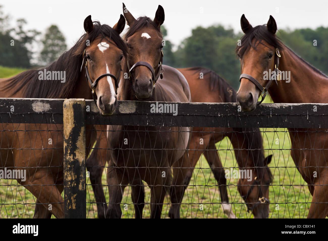 HORSE FARM GHENT NEW YORK - Stock Image