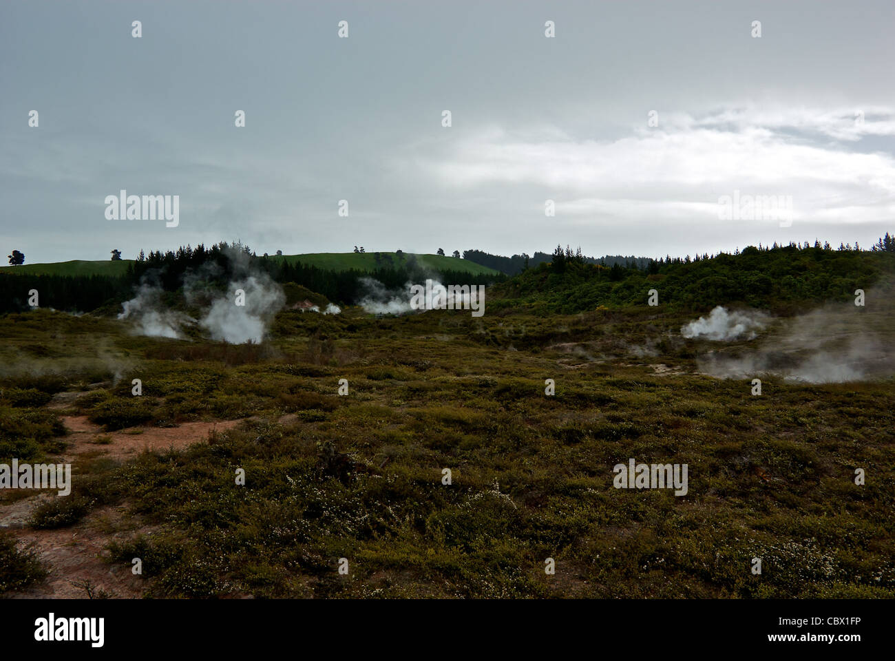Craters of the Moon geothermal steam vents Lake Taupo New Zealand - Stock Image
