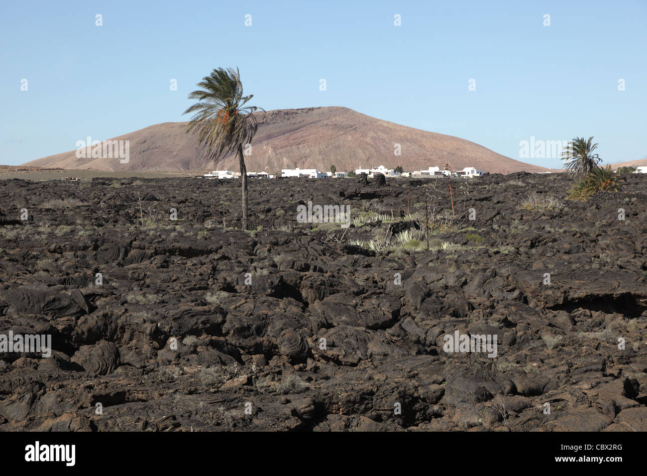 Typical Lanzarote landscape, lava, palm tree, village, and volcano - Stock Image
