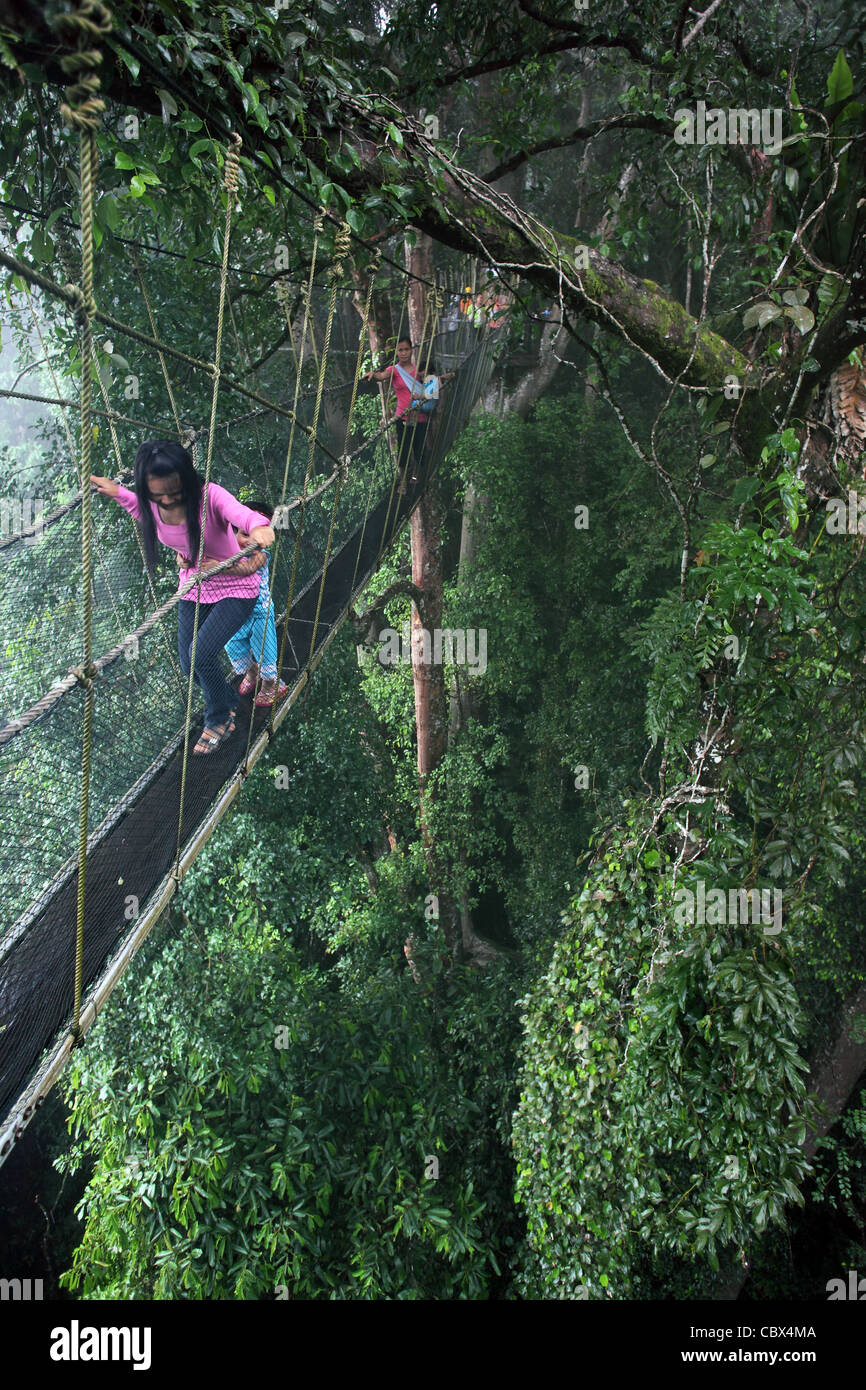 Group of Asian tourists walking on Canopy Sky walk at Poring Hot Springs. Poring, Kinabalu National Park, Sabah, Stock Photo