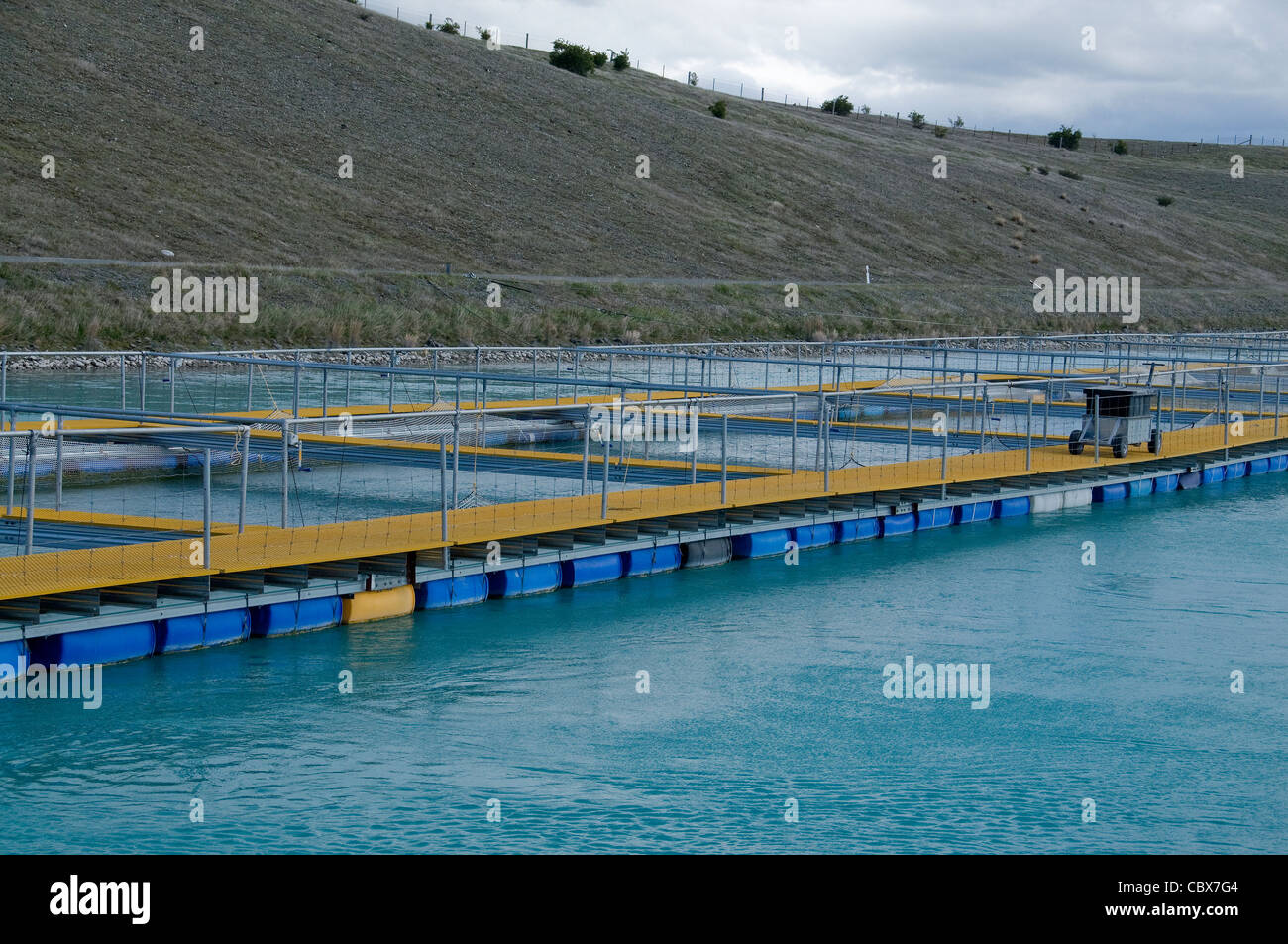 New Zealand's Mount Cook Alpine Salmon farm produces all