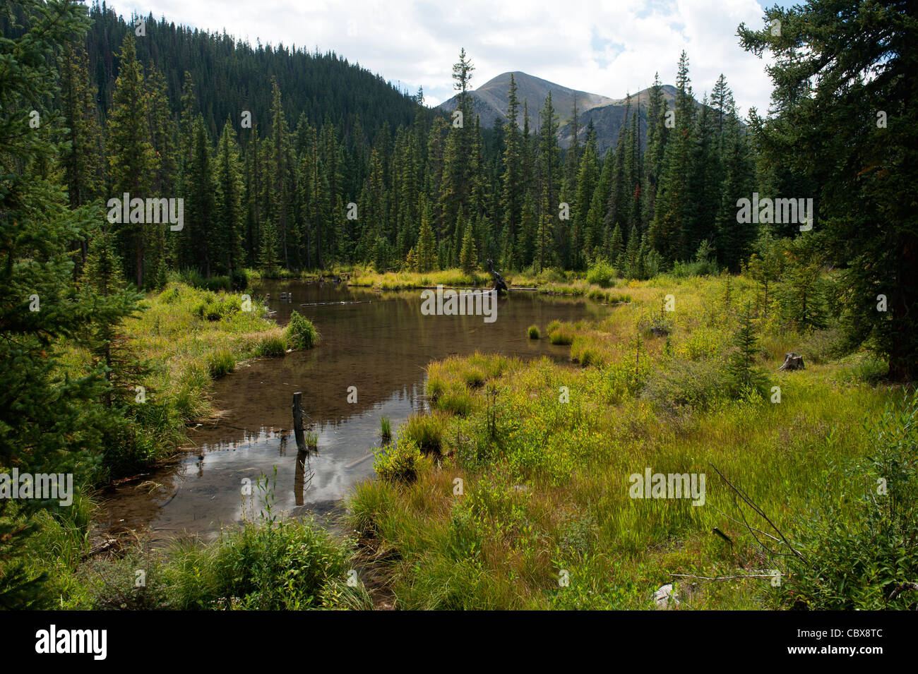 Beaver pond in Cottonwood Creek, Chaffee County, Colorado - Stock Image