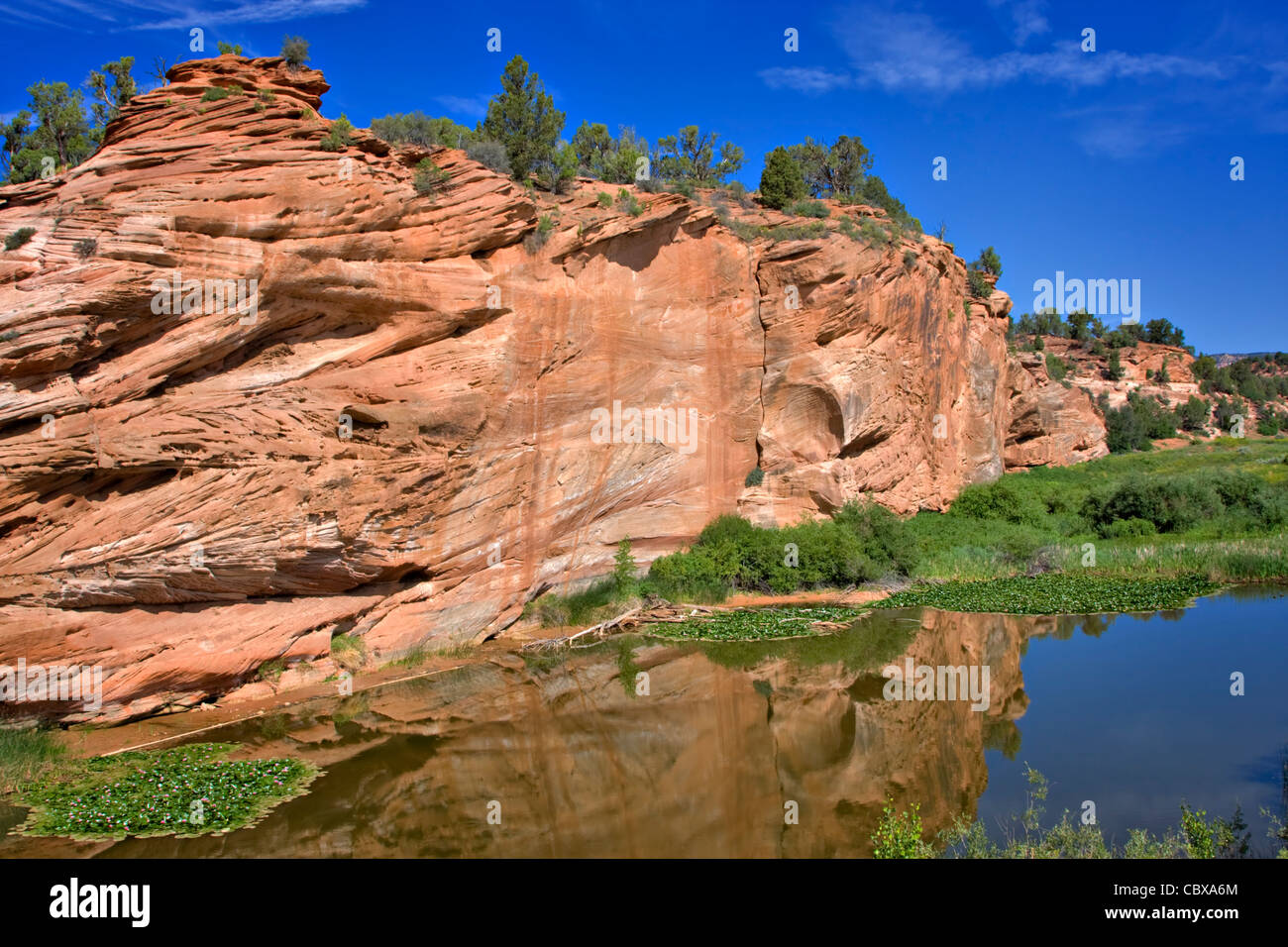 A red sandstone rock formation is reflected in the still waters of a pond on the Kaibab Plateau, Grand Canyon National - Stock Image