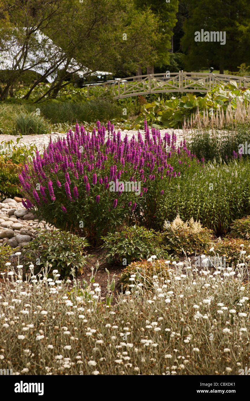 Bog Garden Stock Photos & Bog Garden Stock Images - Alamy