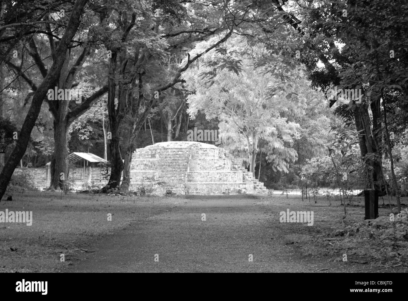 Mayan road or sacbe leading to the ruins of Copan, Honduras. Copan is a UNESCO World Heritage Site.... Stock Photo