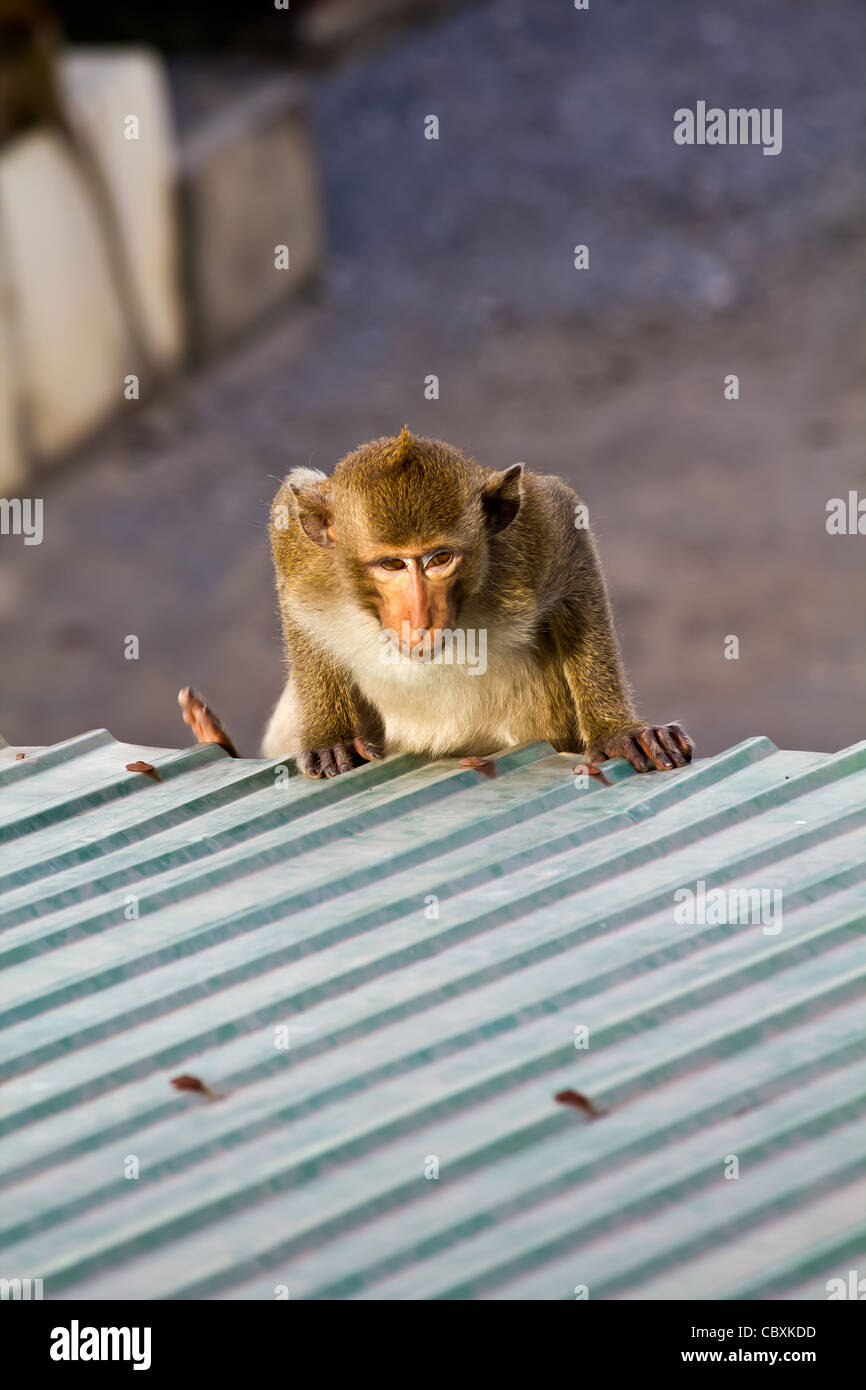 Monkey clamber roof - Stock Image