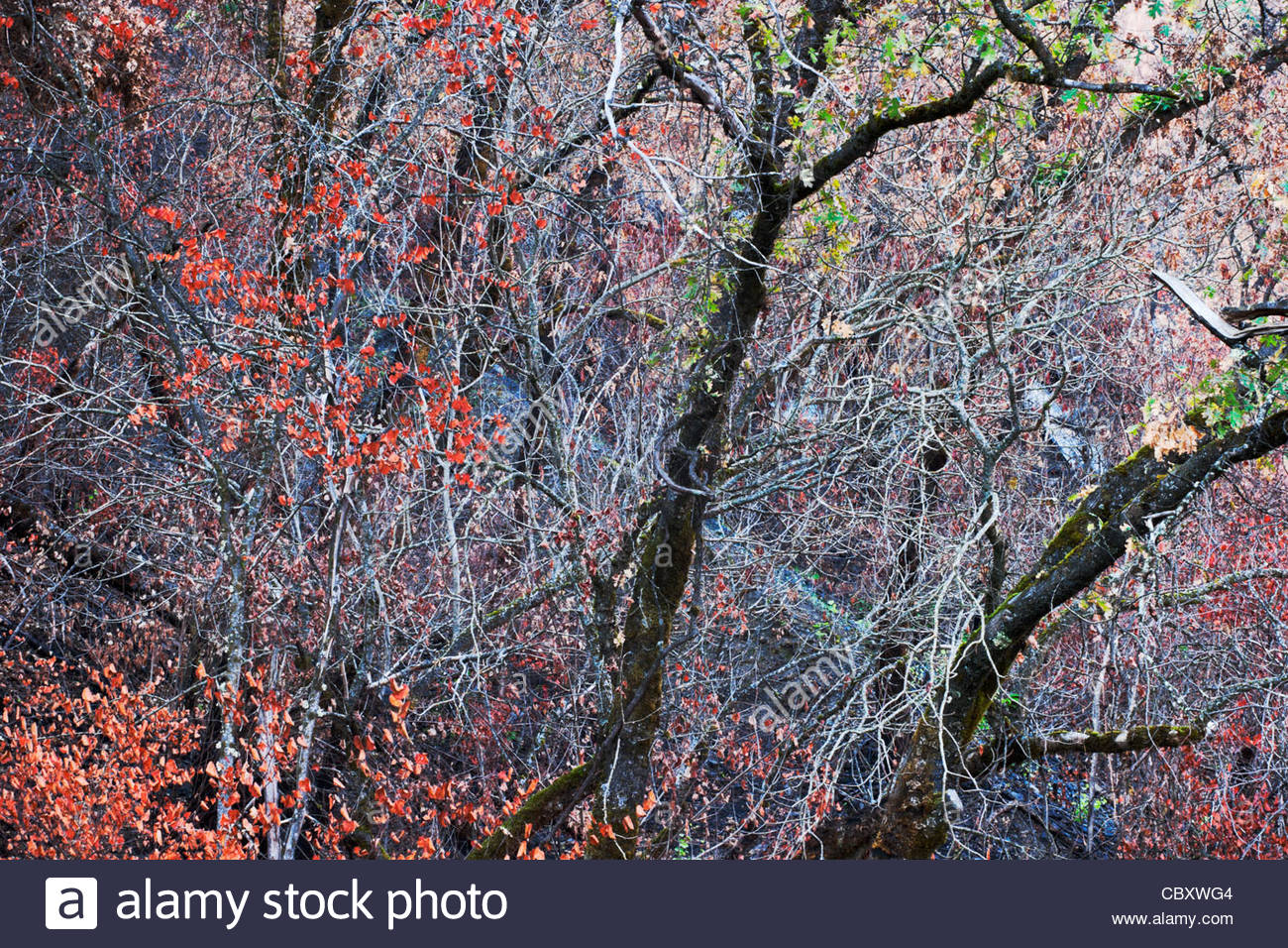 Merced River Canyon Fall Color, Stanislaus National Forest, California - Stock Image