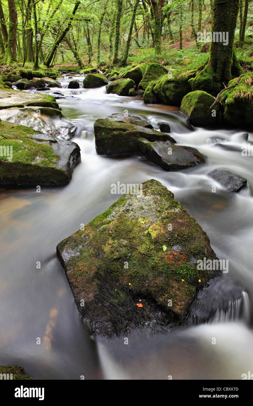 Golitha Falls on Bodmin Moor in Cornwall - Stock Image