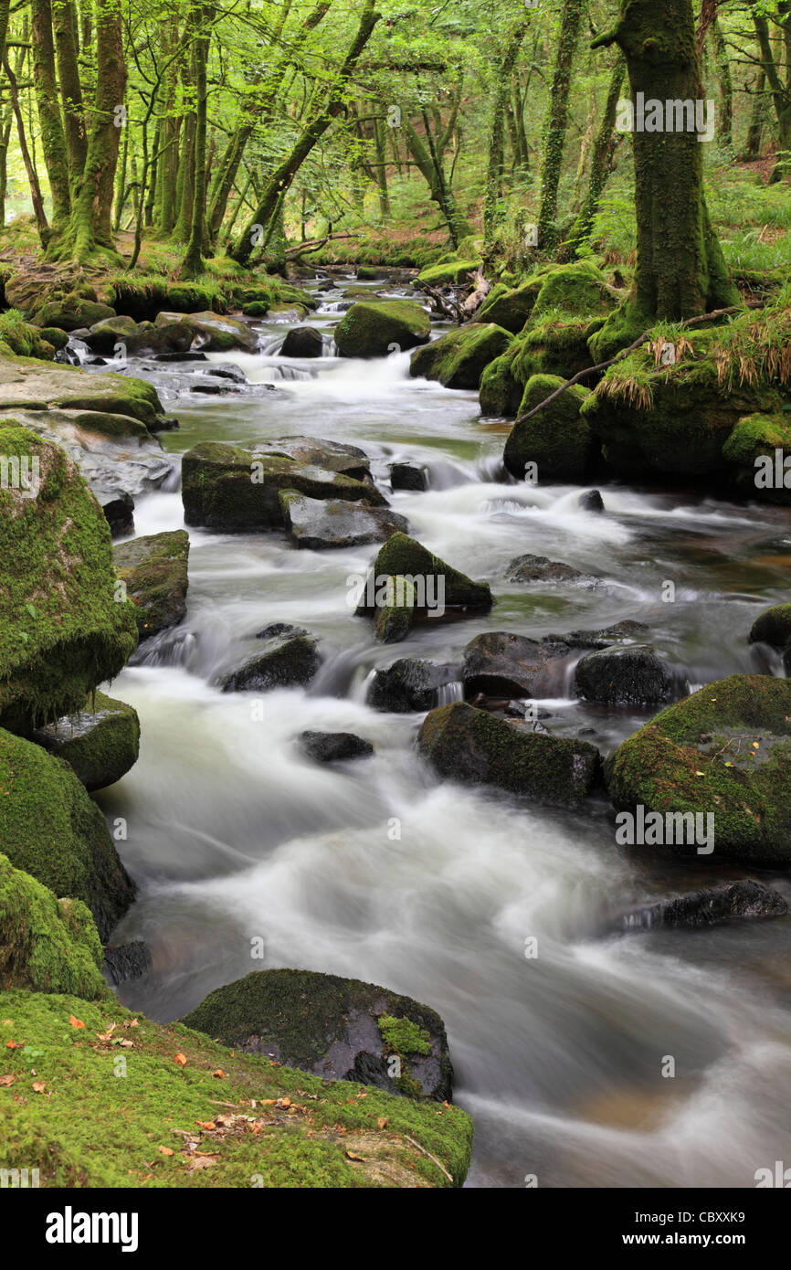 Golitha Falls on the edge of Bodmin Moor in Cornwall - Stock Image
