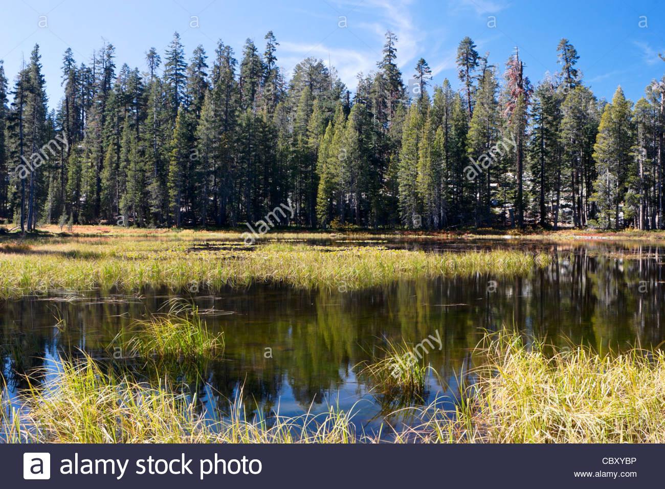 Siesta Lake - Small Alpine Lake on Tioga Pass, Yosemite National Park, California - Stock Image