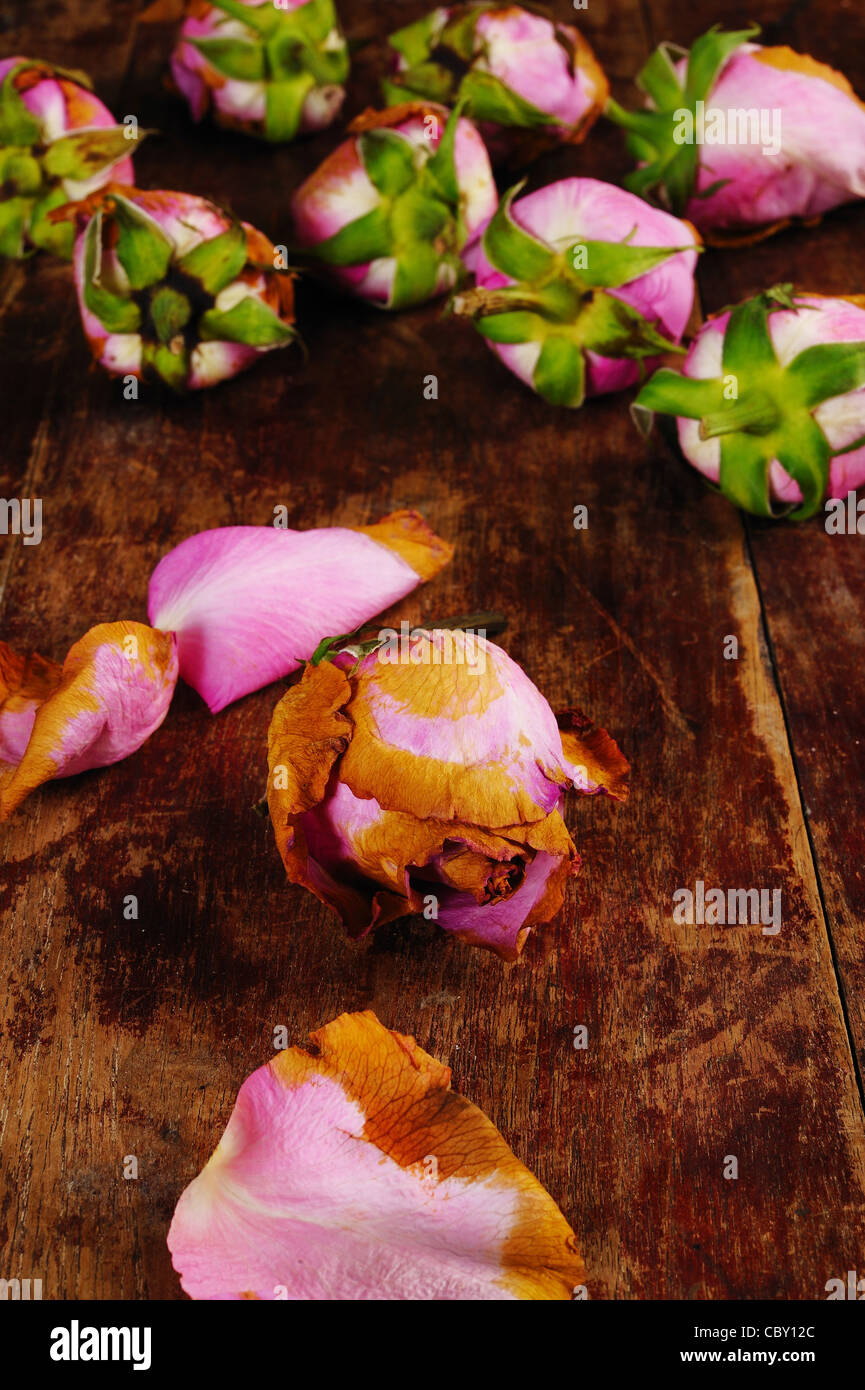 withered rose on wooden background - Stock Image