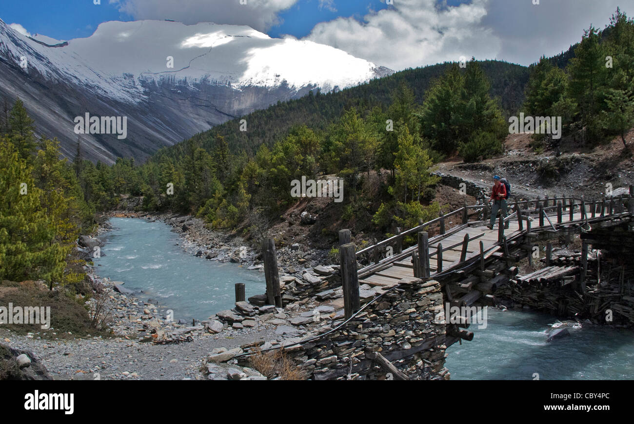Trekker crossing a traditional wooden cantilever bridge on the Annapurna Circuit, Nepal, May 2011 - Stock Image