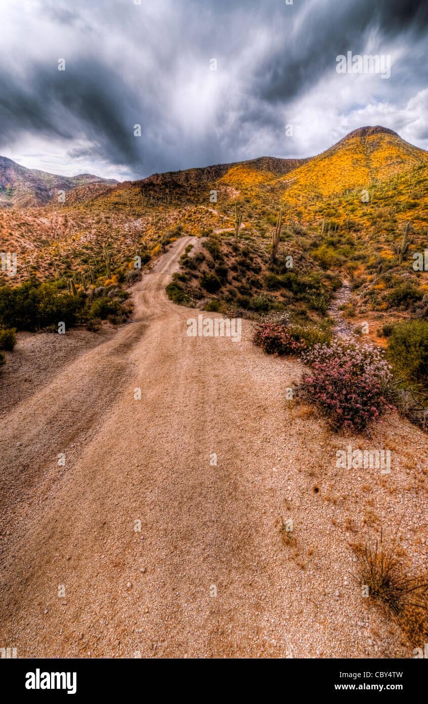 A small dirt road cuts through the Sonoran Desert near Sunflower. Arizona. - Stock Image