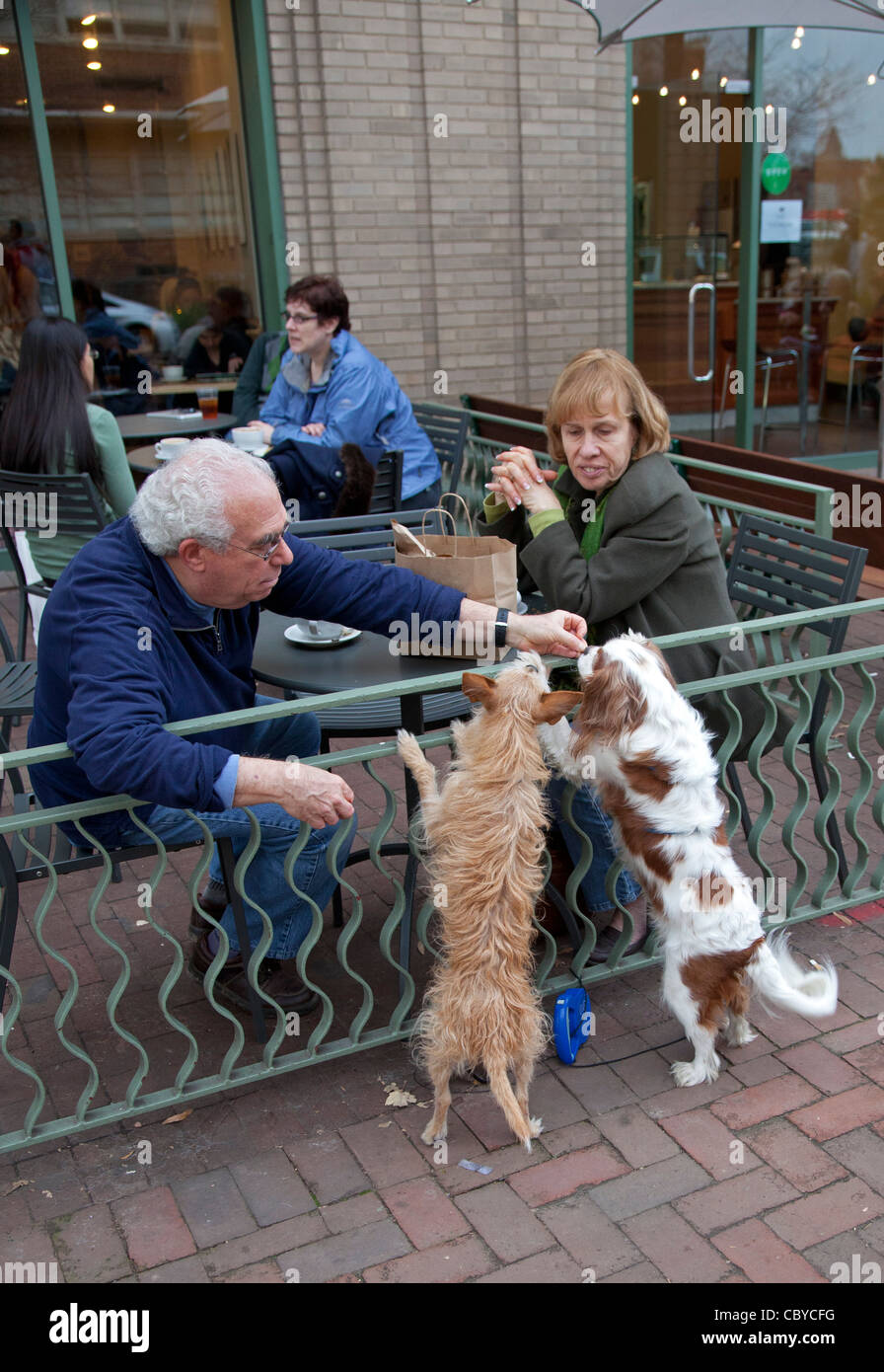 Washington, DC - Diners at a sidewalk cafe feed dogs outside the cafe's fence. - Stock Image