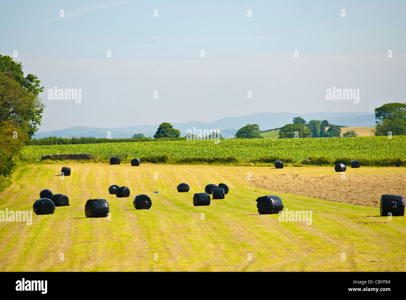 bails of silage - Stock Image