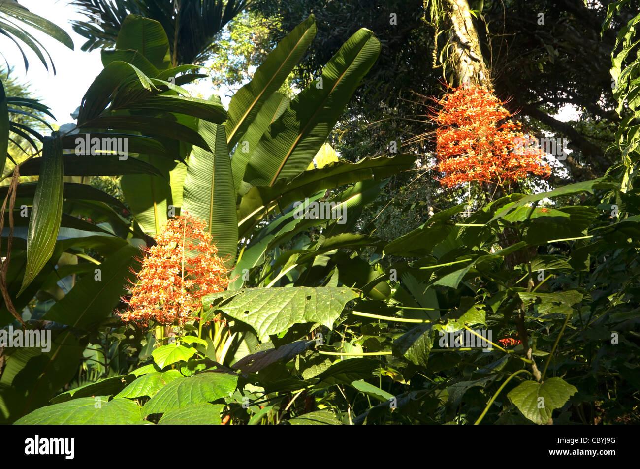 Red Flowers Osa Peninsula Costa Rica - Stock Image
