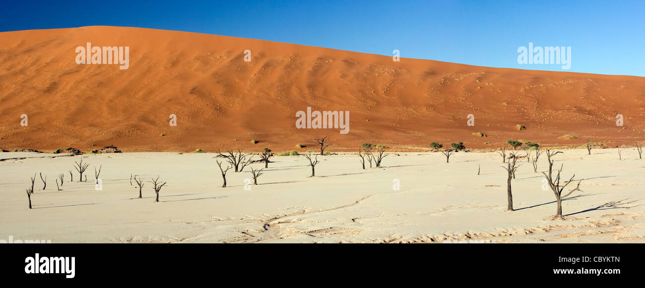 Deadvlei Panoramic Composite Image - in Sossusvlei National Park - Namib-Naukluft National Park, Namibia, Africa - Stock Image