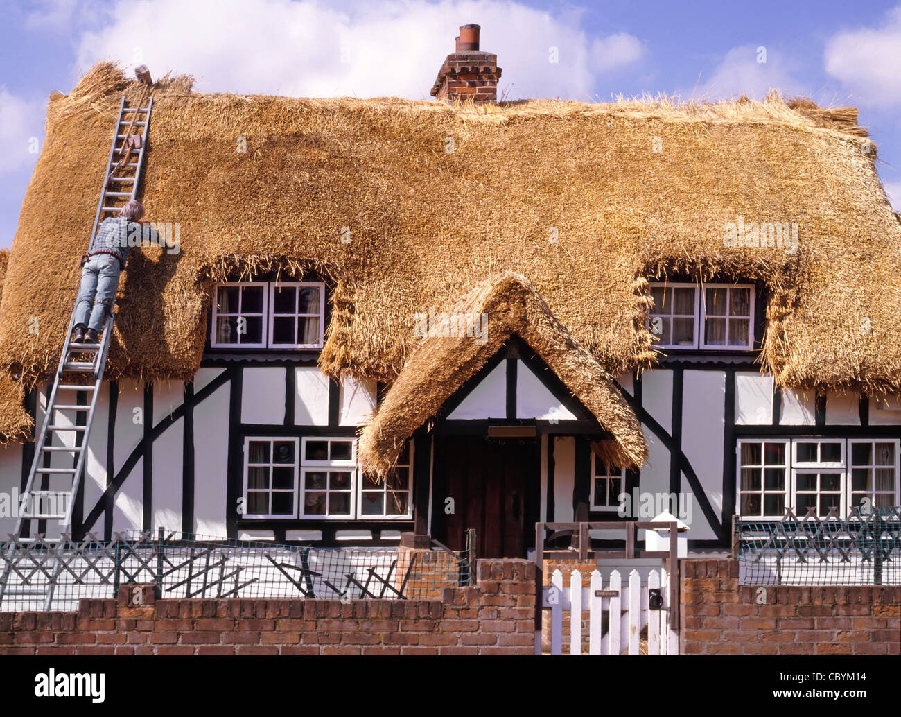 Thatcher working off ladder at house having new thatched roof on half timbered old black and white country cottage - Stock Image