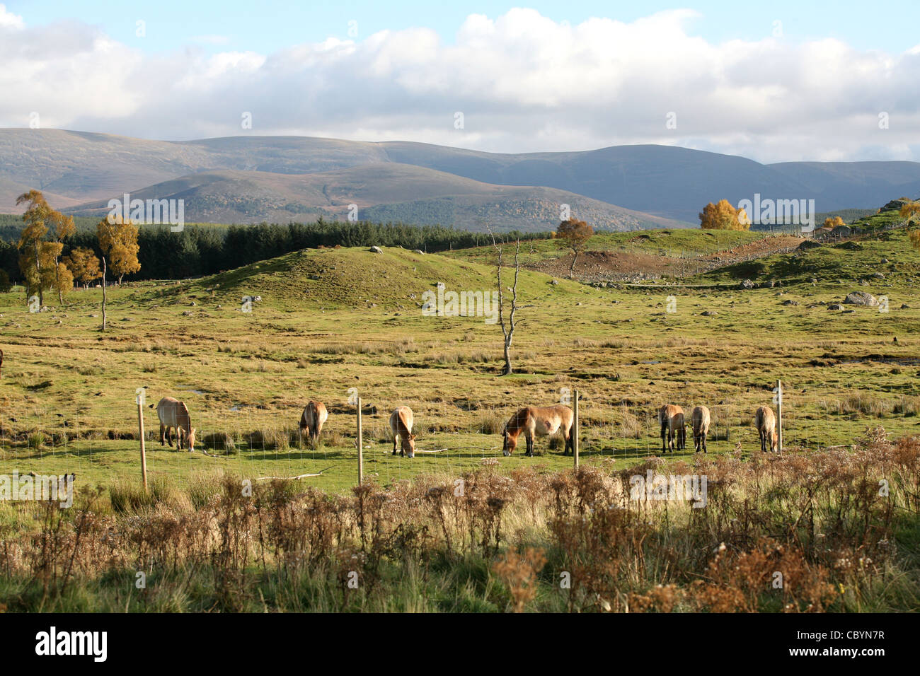 Highland wildlife Park in Kincraig, near Aviemore in the Highlands of Scotland Stock Photo