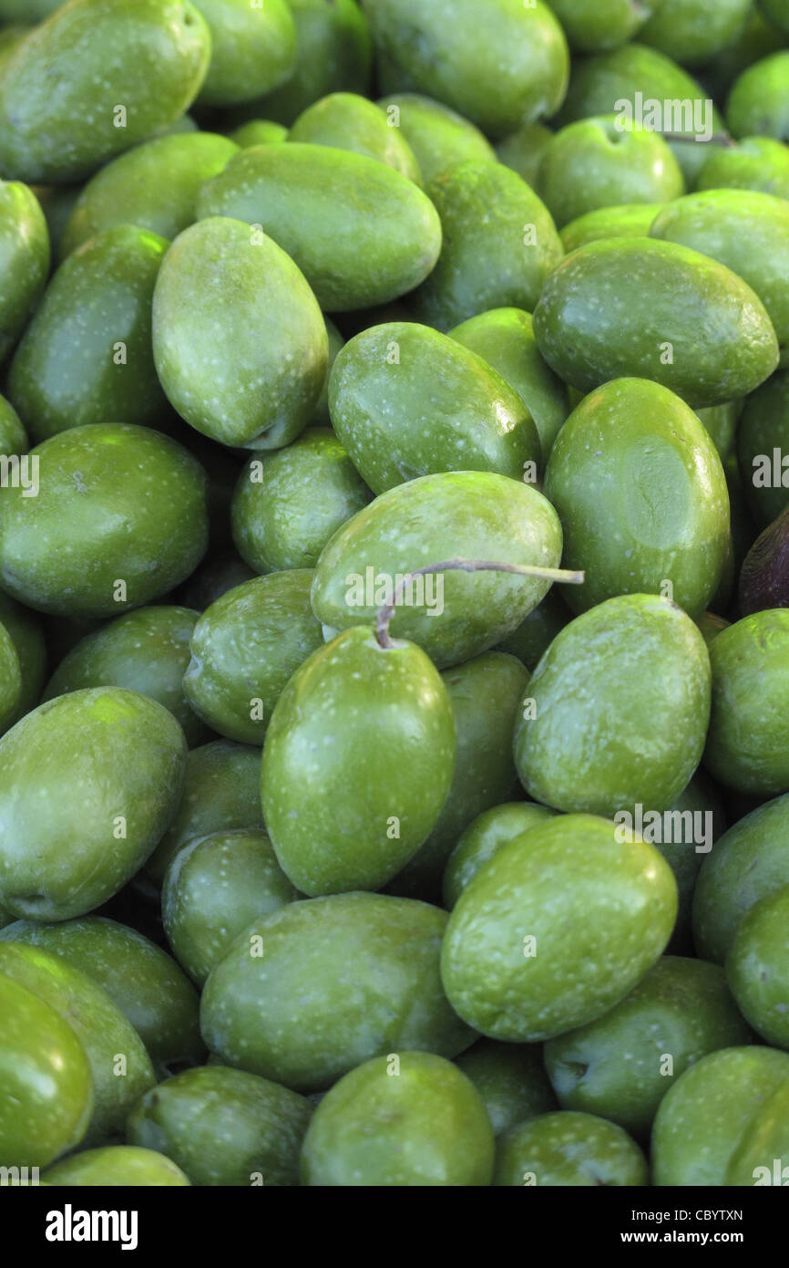 FRESH OLIVES, FRUIT RICH IN VITAMINS A AND E, CORSICA, FRANCE - Stock Image