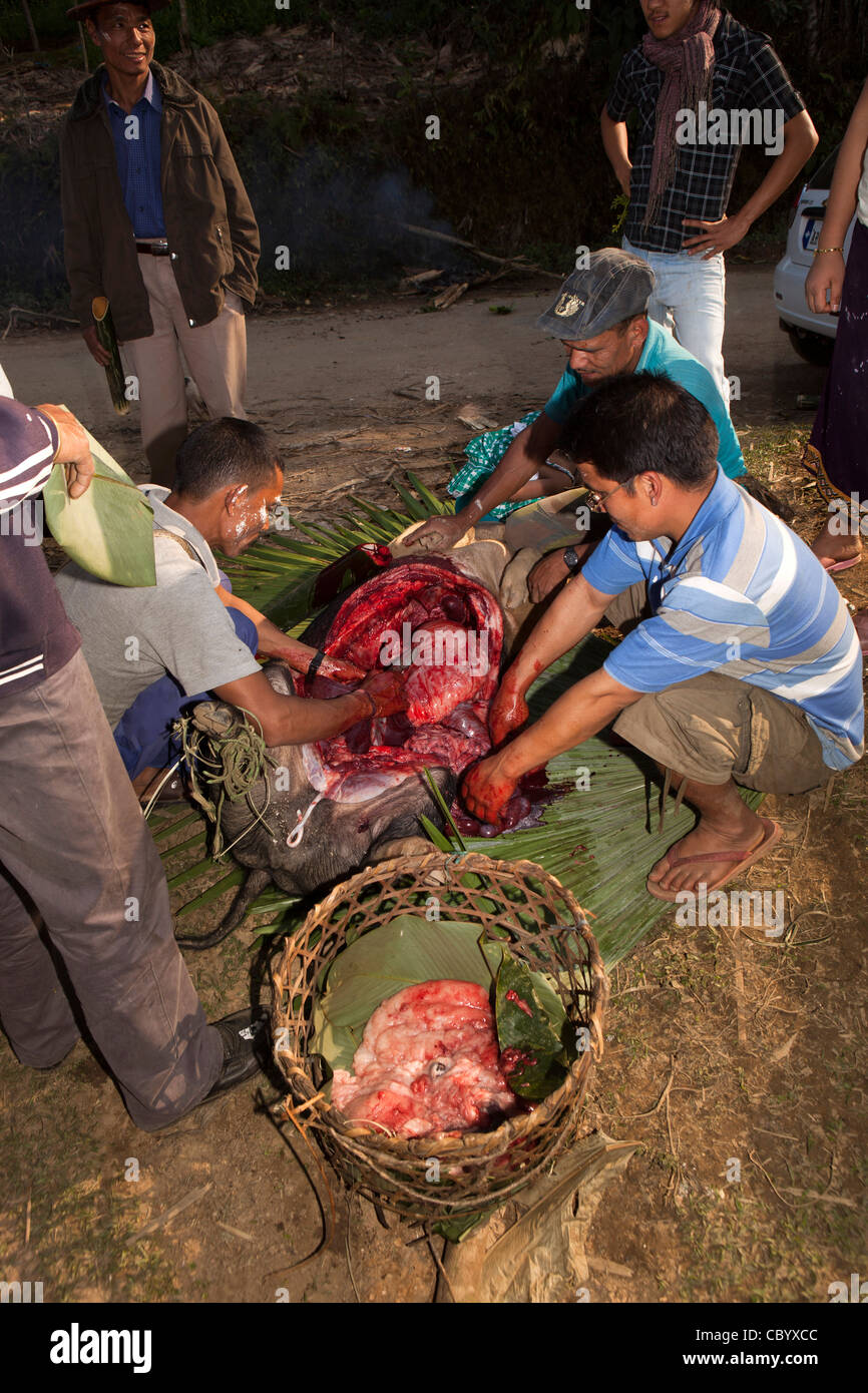 India, Arunachal Pradesh, Along, Kombo, Hurin festival, men removing liver from sacrificed pig for fortune telling - Stock Image