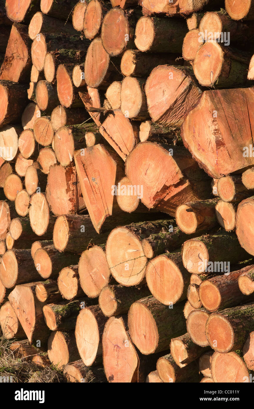 Forestry timber. - Stock Image