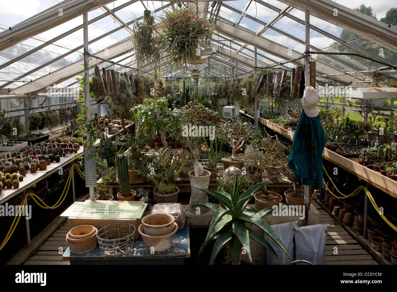 Inside a greenhouse in Botanical Garden in Copenhagen Stock Photo ...