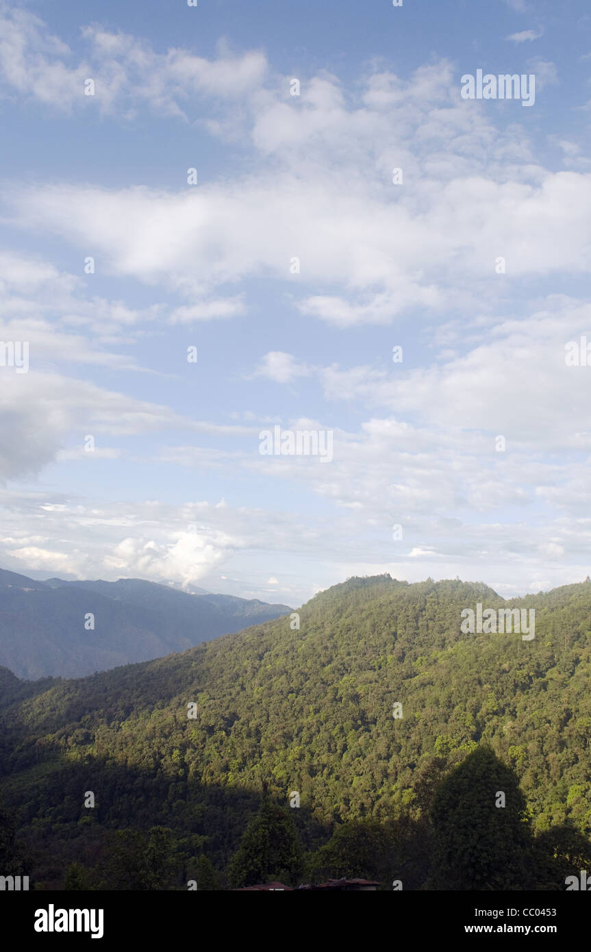 Montane forest in the northeast India - Stock Image