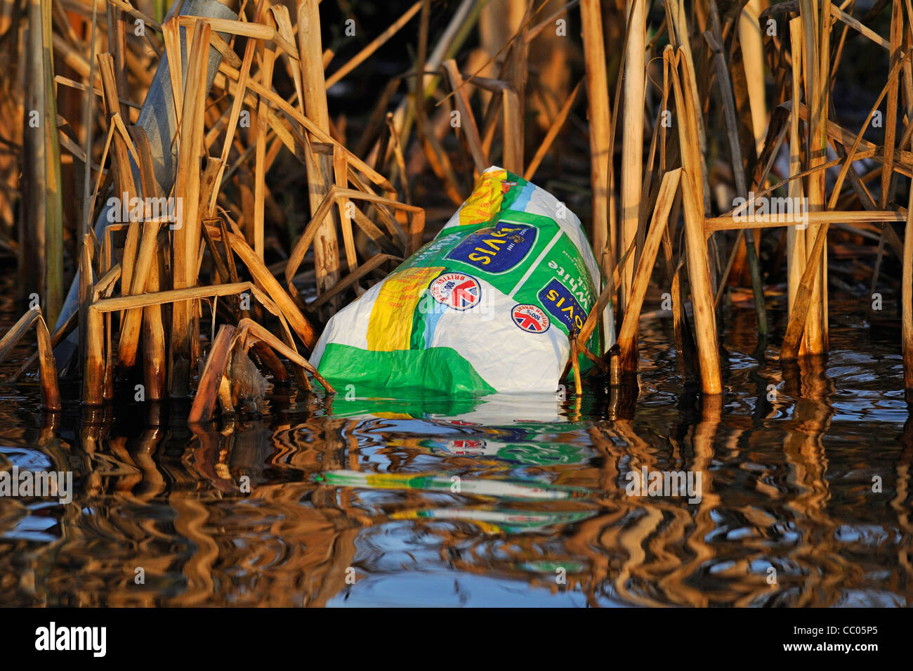 A discard empty plastic bread bag caught in some reeds at the side of a lake.   . - Stock Image