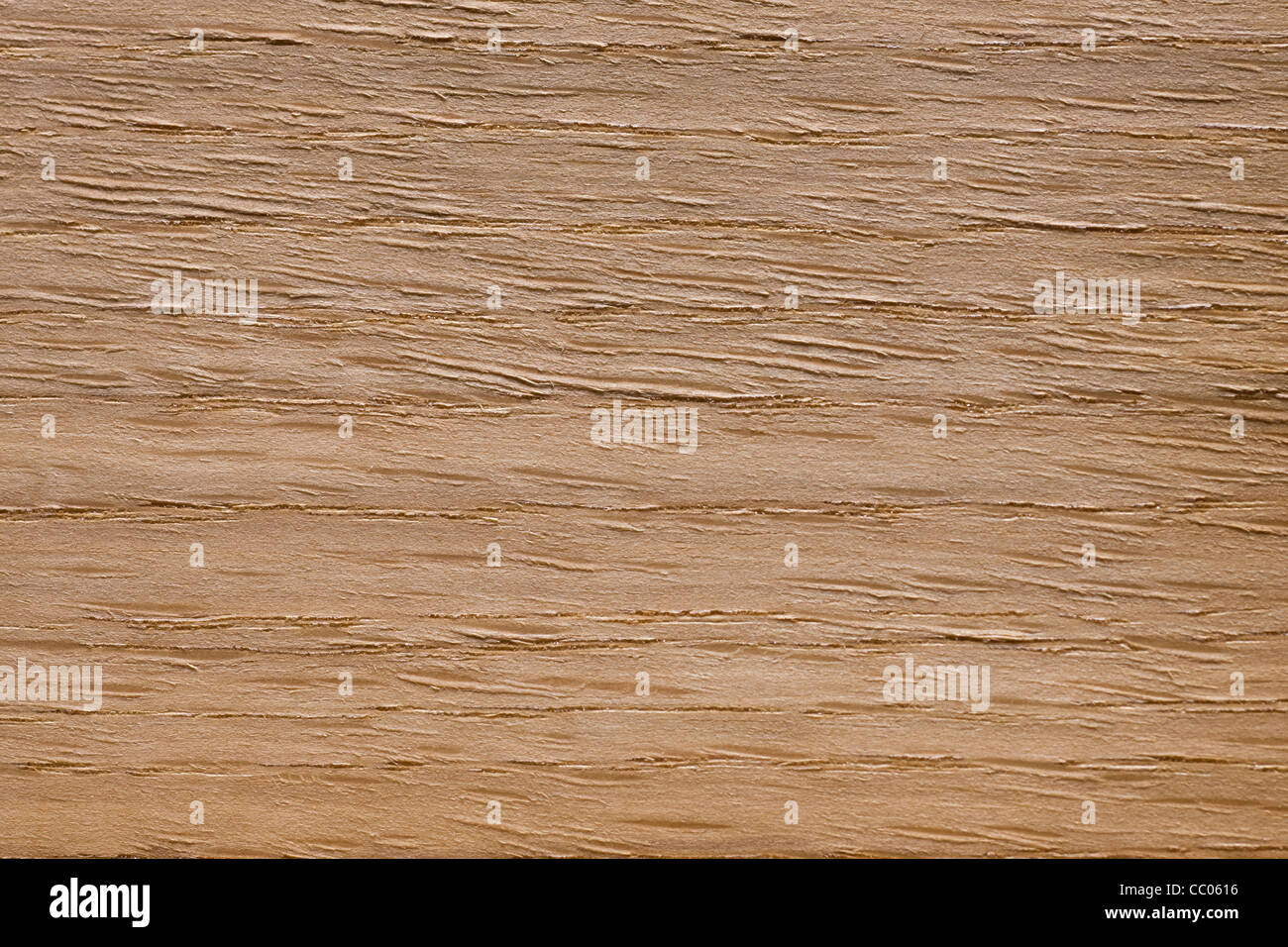Wood grain of American White oak (Quercus alba), North America - Stock Image
