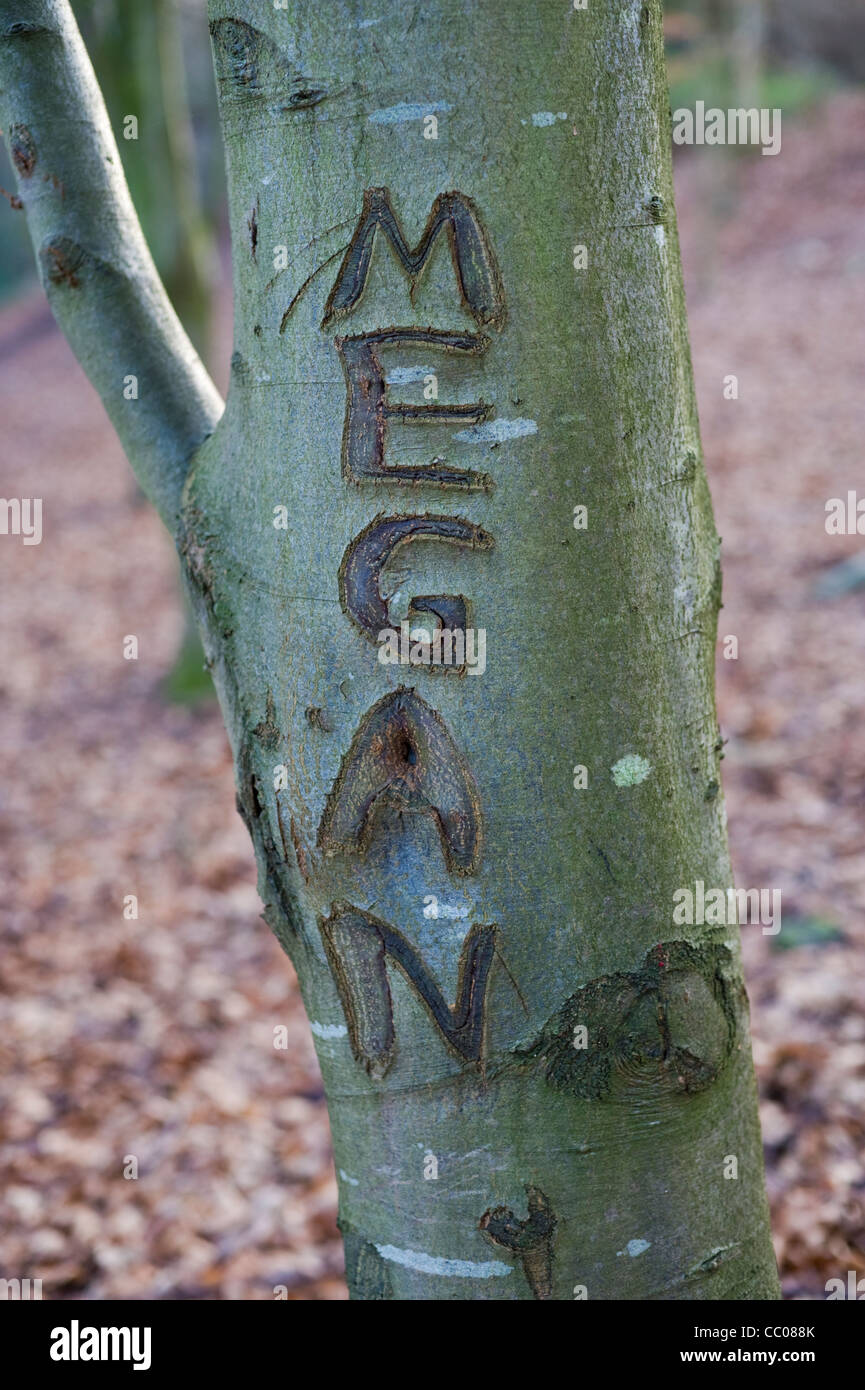 MEGAN Welsh girls name carved on tree in woodland at Hay-on-Wye Powys Wales UK - Stock Image