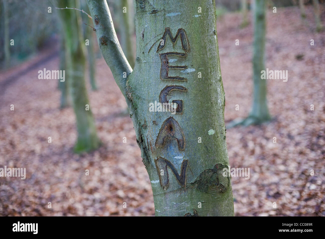 Carved Names On Tree Trunk Stock Photos Carved Names On Tree Trunk