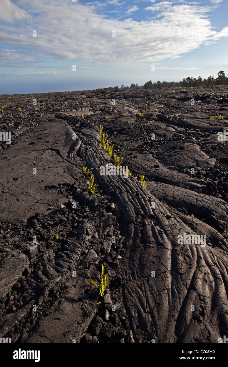 Cooled pahoehoe lava in Hawai'i Volcanoes National Park, Hawai'i, USA - Stock Image