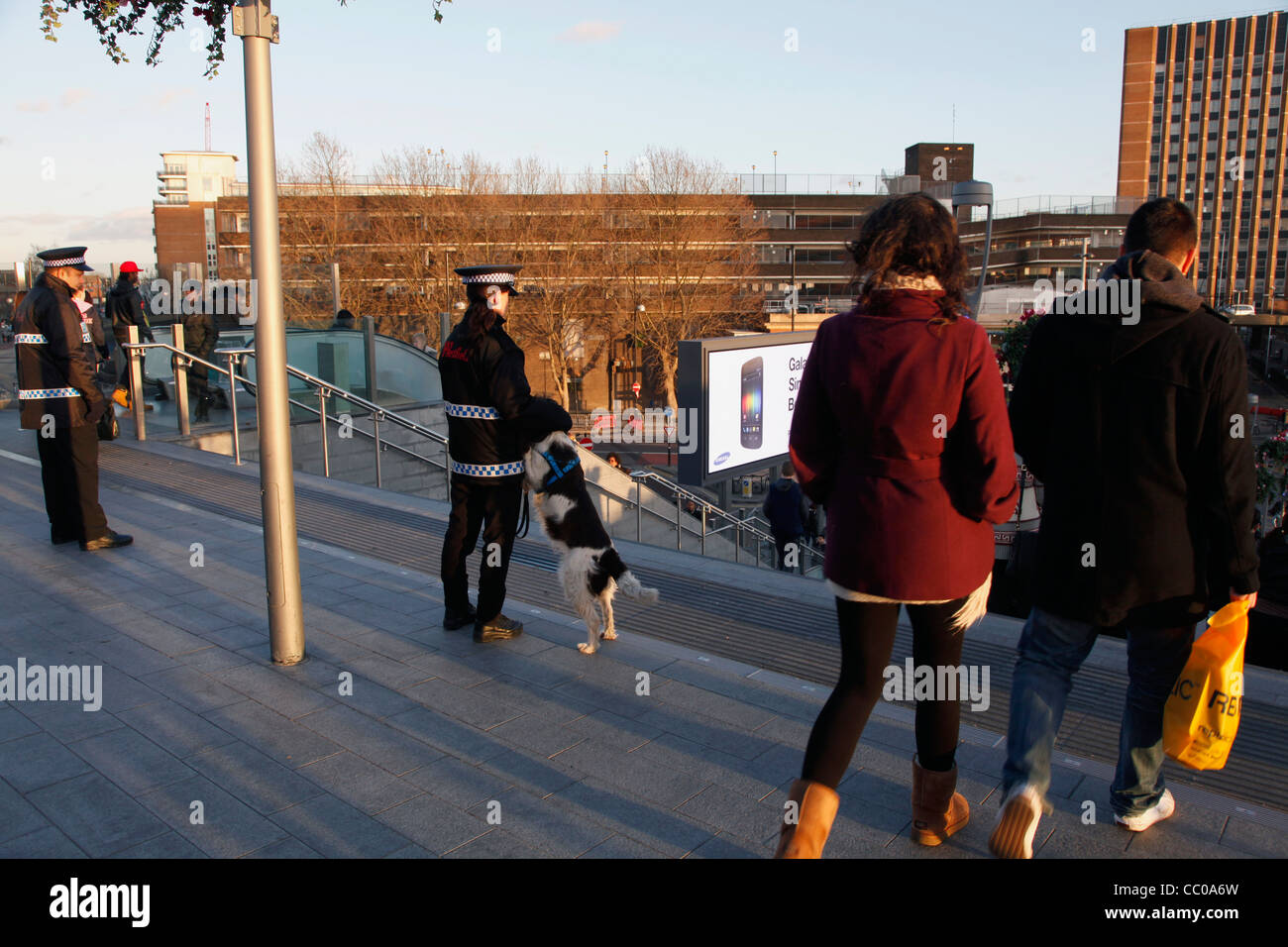 Trained dogs with security staff outside Westfield shopping mall in Stratford City, by the London 2012 Olympic Park, Stock Photo