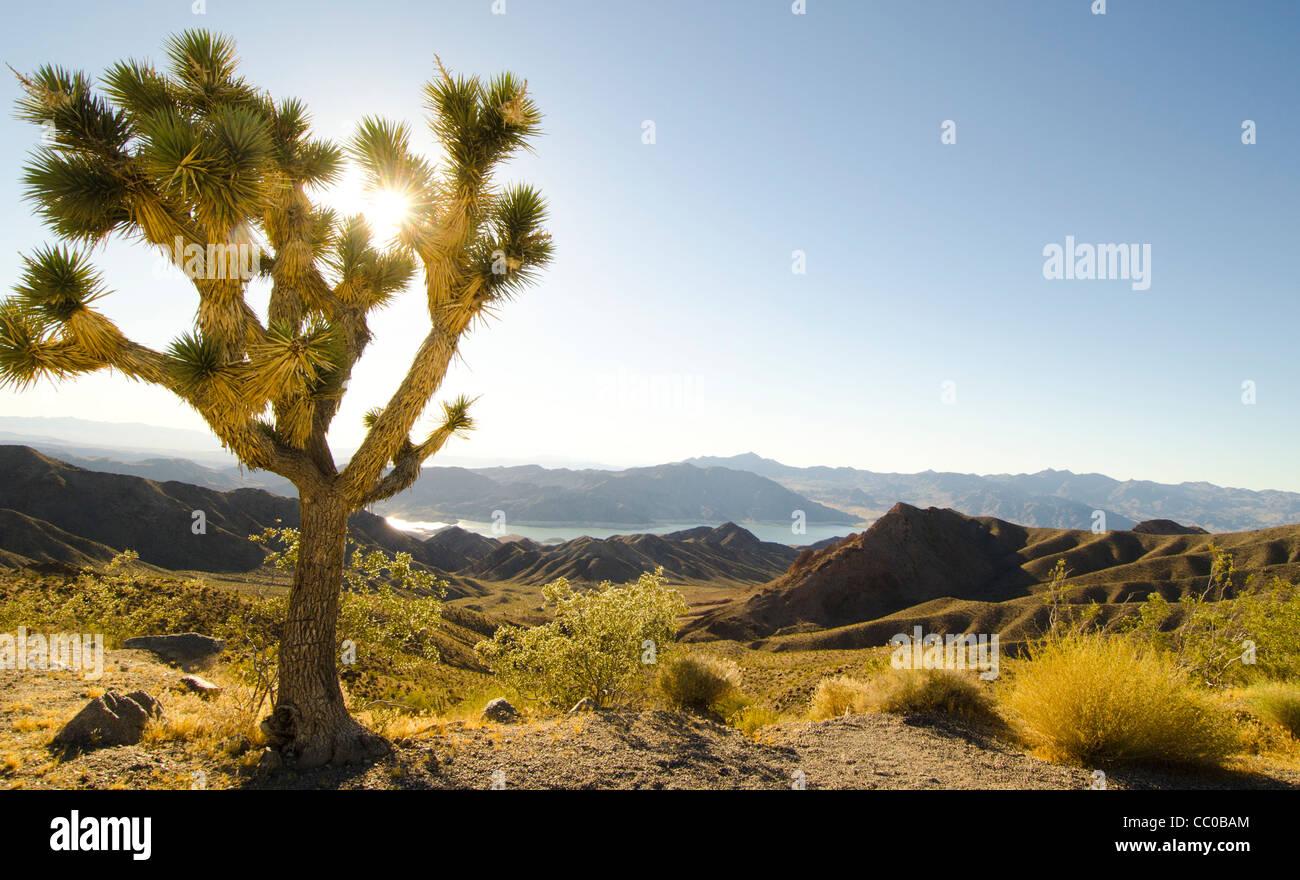 High desert overlook of Lake Mead Arizona Stock Photo