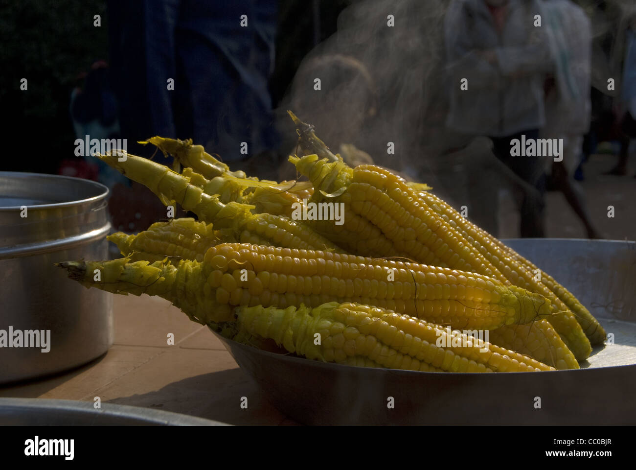 Maize (Zea mays), a food grain from family Poaceae. - Stock Image